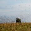 Cordoba Argentina Dove Hunting